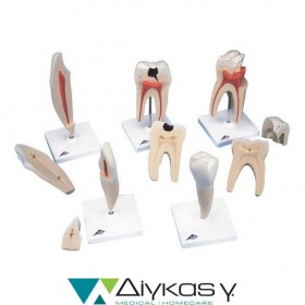 Classic Tooth Model Series, 5 models D10