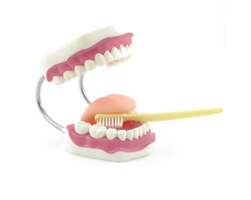 Πρόπλασμα οδοντικής υγιεινής με Οδοντόβουρτσα