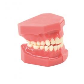 Προπλάσματα Οδοντικά