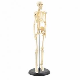Πρόπλασμα Mini Σκελετού επιτραπέζιος H129991