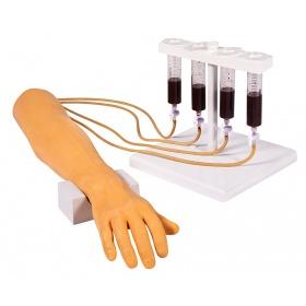 Πρόπλασμα χεριού για φλεβοκέντηση,αιμοληψίας και μετάγγιση αίματος  7010