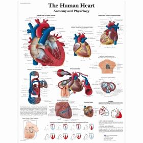 Αφίσα ανθρώπινης καρδιάς